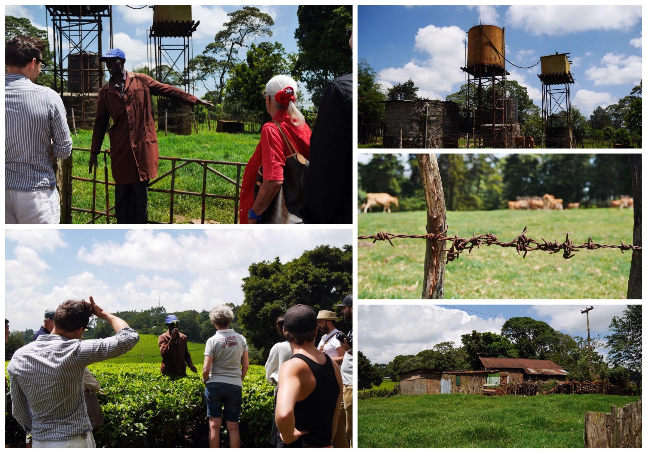 Kiambethu Tea Farm, Limuru, Kenya