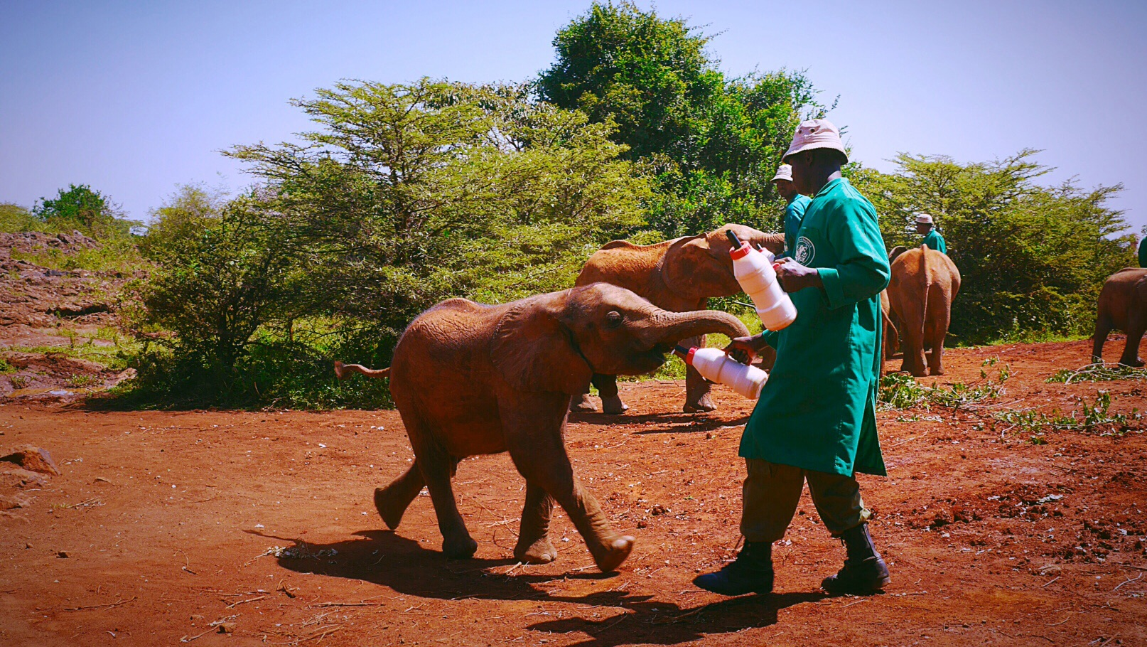 Baby Elephant Feeding at Daphne Sheldrick Elephant and Rhino Orphanage, Nairobi